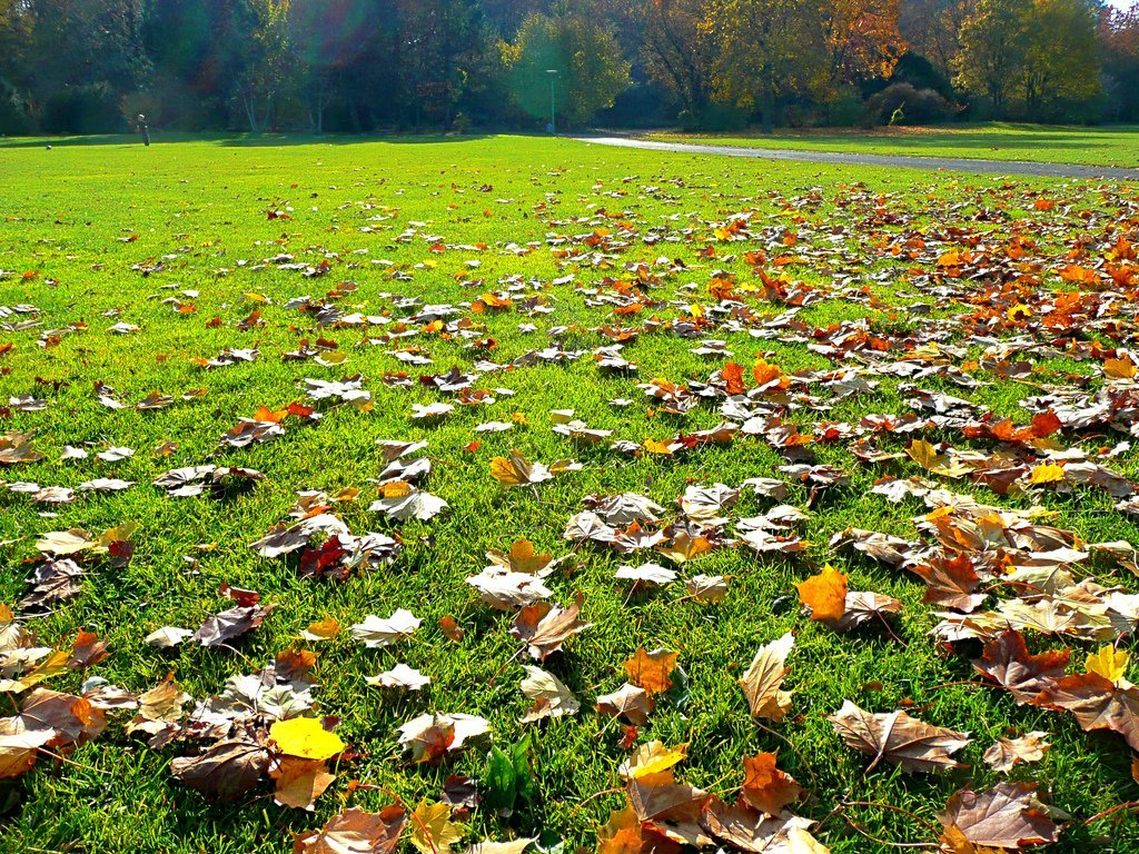 The benefits of fall fertilizing weed a way lawn care for Weeds garden maintenance