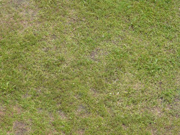grass_grass_0098_01_preview