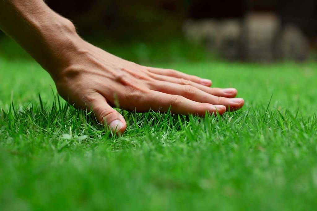 lawn_care_premium