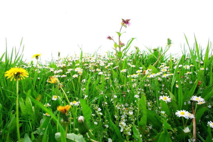 lawn maintenance weed control