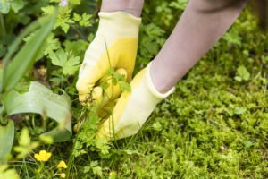 weed control pulling weeds from garden