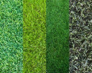different types of grass