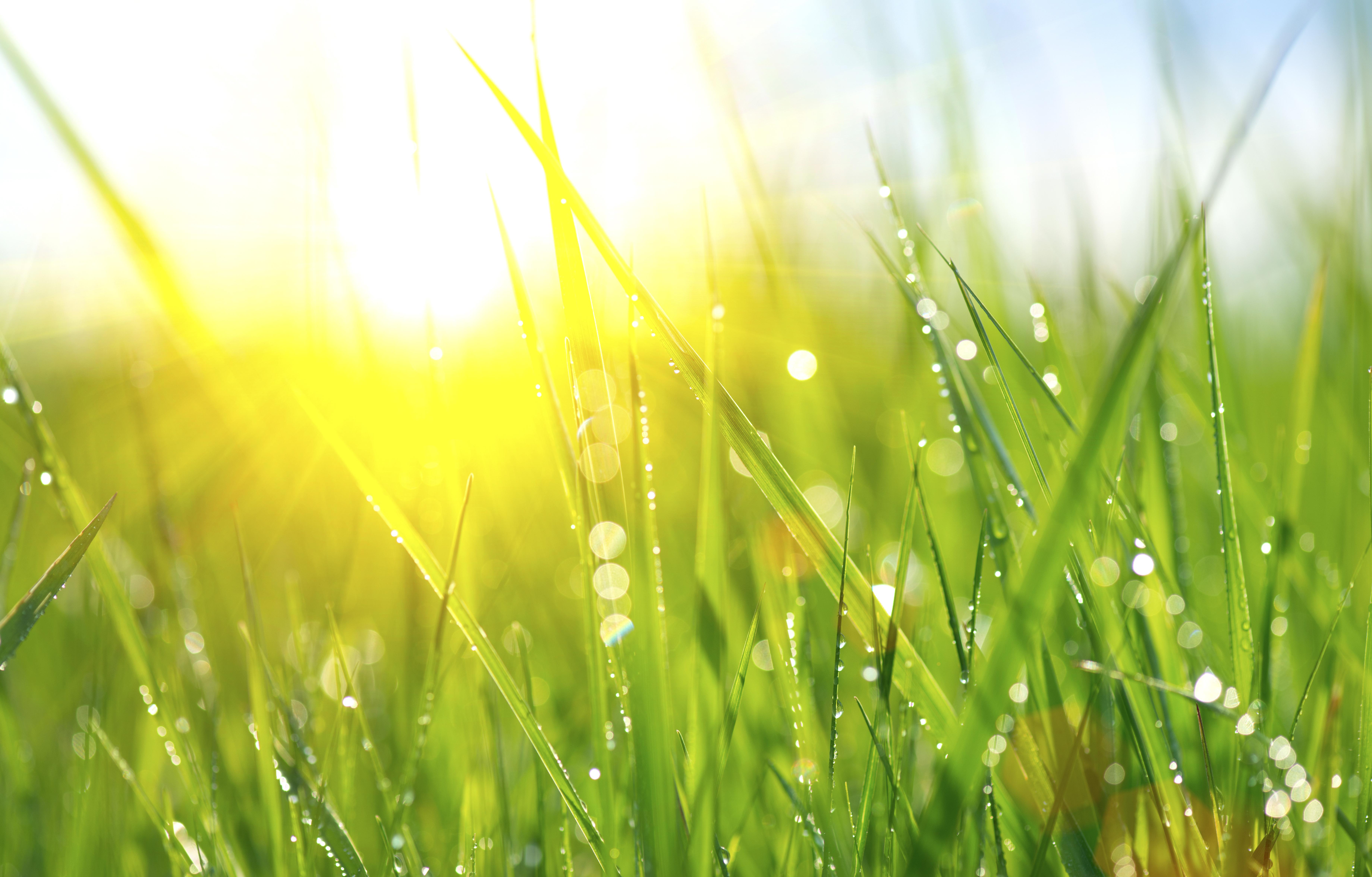 wet grass, moisture