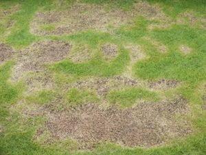 brown dry grass