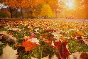 Leaves on yard