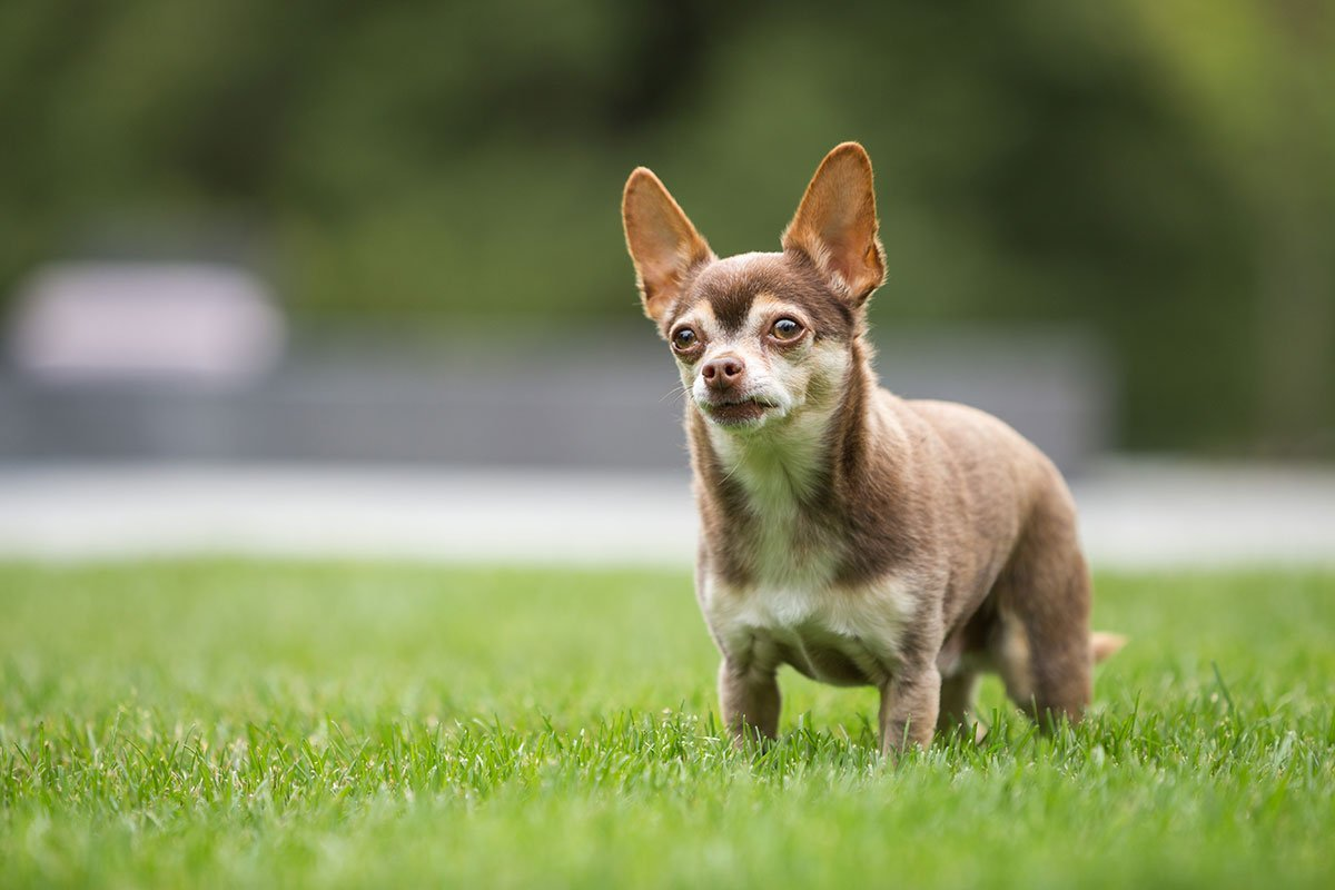dogs and pets on environmentally safe lawn