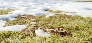 snow mold removal