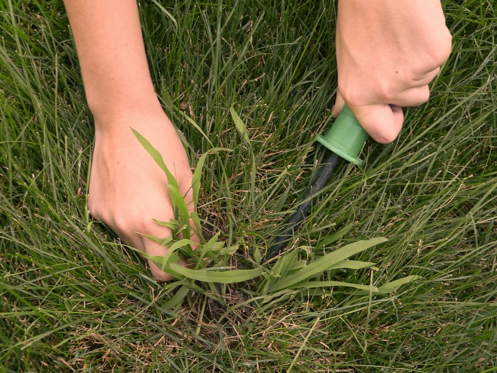Crabgrass Control Lawn Treatments