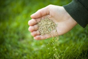 grass seed lawn care