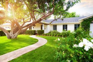 Lawn fertilizer treatment for healthy green grass.