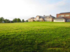 summer grass services