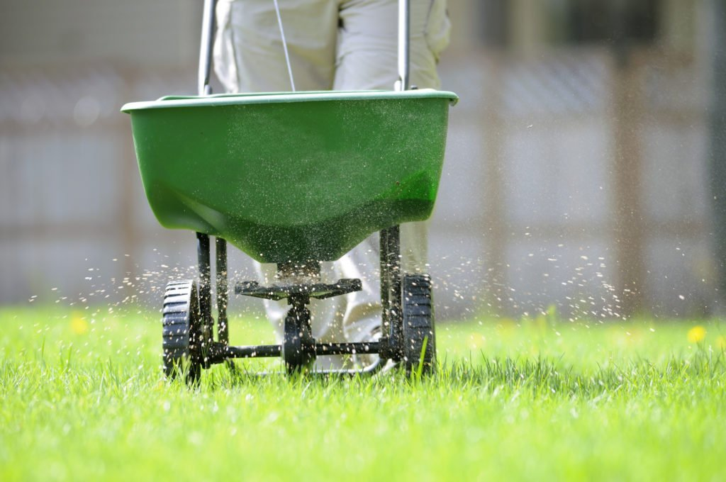 Lawn overseeding in Greater Toronto Area.